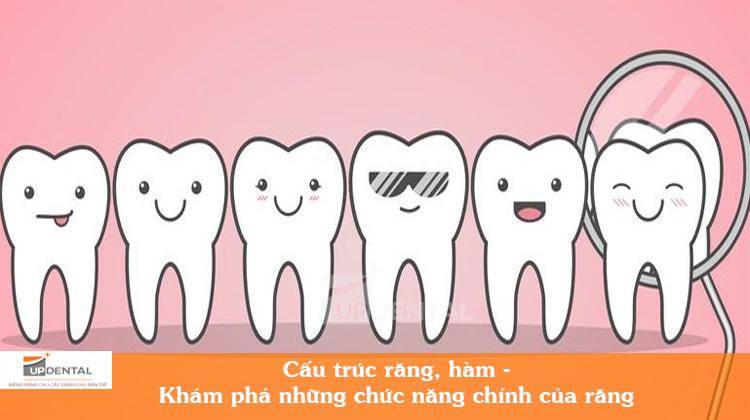 Cấu trúc răng hàm - Khám phá 3 chức năng chính của răng